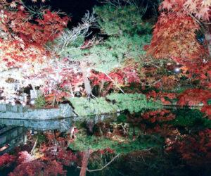 Un automne au Japon : en pleine nature